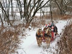 Les joyeux troubadours (Amiela40) Tags: hiver winter sleighride chevaux horse forest for forêt joyeux band