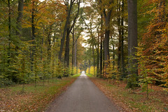 Autumn road (Jessie van Weert) Tags: wonderful wideangle warm wide explore extreme extreem red trees tree yellow dynamic mysterious dynamisch outdoor outside sun sunshine interesting impressive incredible nikon d3100 light nice field orange oranje photography plant plants path adorable atmosphere autumn sigma staatsbosbeheer depthoffield depth dof flickr fotografie fabulous forest fall gorgeous green groothoek holland herfst bijzonder landscape landschap licht zon view beautiful bomen netherlands nature ngc natuur natuurgebied natuurmonumenten magical serene foliage