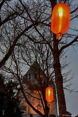 Provins, fête des lanternes 2017 (celine.garrabet) Tags: provins lanternes chine médiéval lumieres lampion nouvel an chinois