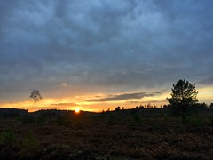 Woolmer Range Sunset (Marc Sayce) Tags: woolmer ranges forest conford whitehill longmoor south downs national park hampshire sunset sundown trees