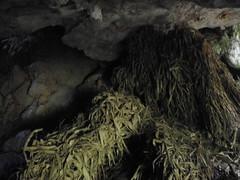 Guizhou China cave  惠水水头出水洞 (黔中秘境) Tags: china guizhou asia mountains 中国 贵州 亚洲 山 大自然 cave cavem caves caving cccp speleo 中国洞穴 贵州洞穴 贵阳 洞 山洞 洞穴