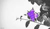 Purple Type (Photograpy / Digital Artist) Tags: nature flowers flower wind life piece moment light purple