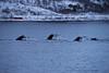 おっさん (edo787ak) Tags: d4s クジラ whale ノルウェー norway tromsø トロムソ