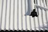 Ripples on the roof (Teruhide Tomori) Tags: 京都 日本 平安神宮 岡崎 洛中 冬 雪 寺社建築 winter snow japan japon shrine architecture construction building heianjingushrine