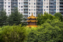 east meets west (Greg Rohan) Tags: eastmeetswest outdoor d7200 2017 building photography chinese gardens plants bamboo plant apartments architecture