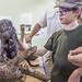 Rothschild's porcupine Gamboa Wildlife Rescue pandemonio 2017 - 10