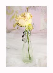 La rose (Champpommier) Tags: roses rose ancienne fleurs pentax k10d
