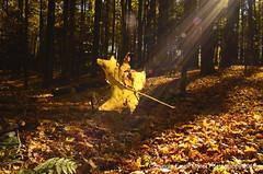_DSC4238 (1) (frankfoto) Tags: autumn fall leaves leaf gorge ithaca sunrays fingerlakes ecovillage lightrays