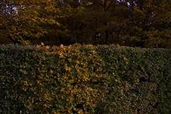 Floriade_251015_23 (Bellcaunion) Tags: park autumn fall nature zoetermeer rokkeveen florapark