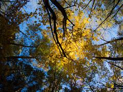 Harris Nature Center 01 (Podsville) Tags: autumn fall us october unitedstates michigan meridiantownship harrisnaturecenter meridianchartertownship olympus9mmbodycapfisheye