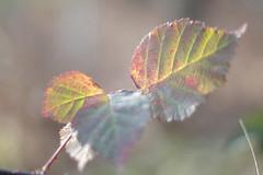 SAM_6020 (BS-Foto) Tags: bsfoto herbst nx200 samsungnx200 samsung samsungnx nx leica summiluxr summilux summilux50mm 50mmf14 50mm bokeh summiluxr50mm leicar