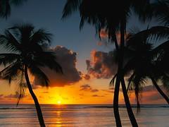 Delight Afternoon in Tobago Wallpaper (hypesol) Tags: beachwallpaper sunsetwallpaper treeswallpaper seawallpaper cloudswallpaper eveningwallpaper