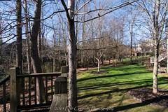 Backyard Row (4 Pete Seek) Tags: trees georgia sony wideangle tokina wa cobb alpha slt superwideangle cobbcounty uwa swa ultrawideangle powdersprings cobbcountygeorgia westcobb dslt powderspringsgeorgia tokinaaf1116mmf28 tokina1116f28 sonyilca sonyilcaa77m2