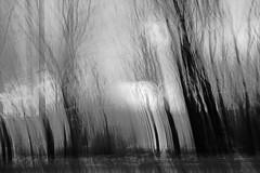a light in the dark (krøllx) Tags: camera trees light blackandwhite bw plants white black art nature monochrome lines movements icm intentional 1511200044