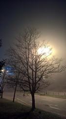 WP_20151209_00_45_46_Edit (Dimitar Dt) Tags: trees blackandwhite bw white mist black monochrome saint mobile zeiss photography sofia bulgaria microsoft ms mists 950 climent lumia kliment tumblr ohridski lumia950 okhridski lumiaandplaces