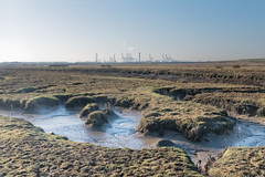 Canvey marshes