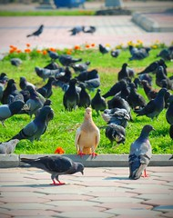 magnificence of contrast (ahmedmostafaadel) Tags: bird queen stand alone magnificence contrast dove green love flower group doves jeddah ksa