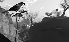 """Wake up, a new year has begun."" (LoneSolitarian) Tags: second life secondlife sl virtual dark light shadow art firestorm gimp photography windlight photo sim 3d nature landscape scenery beauty romance serene black blackandwhite monochrome grey frisland"