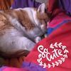 (kelli.bergin) Tags: orangecats jenkins anythingyoulike day30 squareformat instagramapp square iphoneography fms photoaday 2016 december december2016 hiyapapyaphotoaday hiyapapya