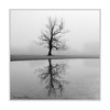 Tree in the Fog (Paul Compton (PDphotography)) Tags: fog mist tree weather barbed wire fence reflection mirror