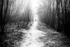 walker (ewitsoe) Tags: monochrome blackandwhite bw ewitsoe nikon d80 winter zima cold forest trees sticks man trail chilly poland polska poznan light dark shadows woods