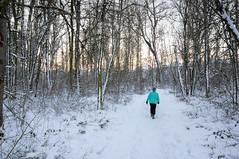 Portland Oregon Snow (Richtpt (Rich Uchytil)) Tags: 2017 maddie oregon pdx portlandor snow tree winter portland unitedstates us