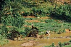 Collecting Water at River, Sơn La Vietnam (AdamCohn) Tags: 122kmtobnnahayinsnlavietnam adamcohn bnnahay snla sơnla vietnam farm farmers farming geo:lat=21425081 geo:lon=103724447 geotagged hills karst mountains rice river waterwheel women wwwadamcohncom phổnglăng