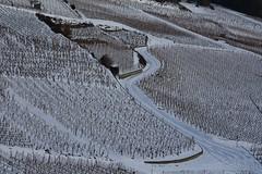 neige dans les vignes (bulbocode909) Tags: valais suisse fully vignes nature neige hiver routes guérites