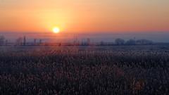 Sunrise over the floodplain. (Gudkov A) Tags: d7000 nikon dawn silhouettes winter open water aksay donregion novocherkassk morning fog ростовскаяобласть аксайскийрайон мишкинская восход камыш туман