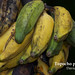 Topocho plantain, Llanos of the Orinoco