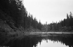 6.2016 Horseshoe Lake BW Cannon PS E14 (Jcicely) Tags: 2016 branches bw canonfilmpointandshoot easternwashington june kayaking lillypads loonlake loonlakewithmarvin trees water