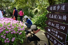 Taoyuan_20140202_012_KML3395 (Kevin Meng-Ju Liu) Tags: 2014 spring february flower tulip taoyuan 台灣 桃園 桃源仙谷 nikon d800 nikkor 28300mmf3556gvr