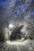 Arbres givrés - Saint Hilaire Du Touvet - Chartreuse - Copyright Bruno Lavit (kazimodo38) Tags: chartreuse froid frost givre neige sainthilaire