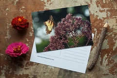 (Theresa Best) Tags: summer flower nature butterfly shopping visions spring colorful forsale mail bokeh postcard snail best theresa etsy greetingcard greeting snailmail sprouting mchenrycounty smallbusiness shopsmall theresabest sproutingvisions