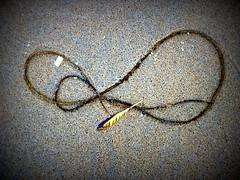 Seaweed021 (Quetzalcoatl002) Tags: life seaweed beach strand coast seaside scheveningen sealife vegetation attractiveness zeewier