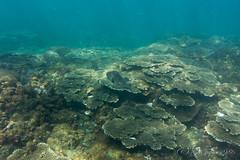 (GenJapan1986) Tags: 2015             nikon1aw1 japan tokyo island travel sea pacificocean fish underwater hachijoisland