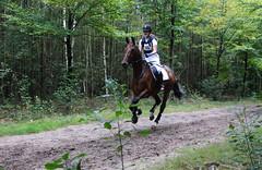 Doorn (Steenvoorde Leen - 1.5 ml views) Tags: horses horse jumping cross doorn pferde pferd reiten manege paard paarden springen 2015 utrechtseheuvelrug hindernis sgw arreche manegedentoom