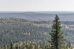 Pyhitys mountain (Juho Holmi) Tags: park sun macro nature beautiful weather k trekking trek suomi finland dc scenery finnland pentax 5 north sigma sunny 45 national 17 28 af oulu northern norra 70 mets k5 finlandia kansallispuisto luonto retki sterbotten ostrobothnia taivalkoski syte 1770mm f2845 retkeily metshallitus pohjoissuomi pohjoispohjanmaa soiperoinen retkeilyalue pyhitys sytteen