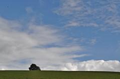 (Uli He - Fotofee) Tags: nikon wasser herbst himmel mais uli baum ulrike rhn ernte wanderung wasserkuppe himmlisch pftze herbstlich hergert herbstlicht stellberg erntezeit nikond90 fotofee ulrikehe ulrikehergert ulihe