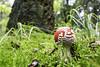 IMG_2993-Modifier (mycenium) Tags: mushroom automne canon belgium belgique region foret brabant champignon 6d wallon wallonie 2015 grez grezdoiceau wallone doiceau
