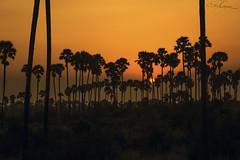 sunset (sailalgoparaju) Tags: trees sunset landscape backlit vizag