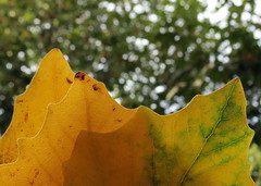 Leaf Story (Ebrahim Baraz) Tags: baraz