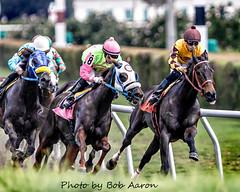 MK2_6708_Nov 12 2015_Orlando Bocachica (8) + Eddie Castro (7)_MED (BobAaronMaine) Tags: orlando bocachica eddie castra gulfstream park racing hallandale beach thoroughbred horse florida horsetrack racetrack