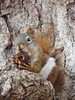 Highbanks 11-1-2015 (tlucal) Tags: autumn fall nature fallcolors trails babysquirrel metroparks highbanks columbusmetroparks
