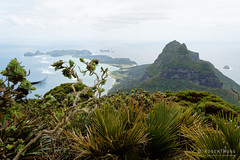 20151029-21-Mt Lidgbird from summit of Mt Gower (Roger T Wong) Tags: trek outdoors island walk australia hike nsw newsouthwales bushwalk tramp lordhoweisland lordhowe 2015 mtgower mtlidgbird sony2470 rogertwong sel2470z sonyfe2470mmf4zaosscarlzeissvariotessart sonya7ii sonyilce7m2 sonyalpha7ii