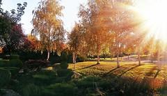 (*Tue*) Tags: autumn trees sun sunlight tree green fall yellow flickr phone shot fallcolors autumncolors fallcolours flickrturkey
