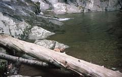 swimming (peanut.butter14) Tags: hiking pitbull mountainstream sillydog pitbullmix optoutside hikeva