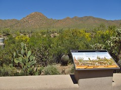 Saguaro National Park (Jasperdo) Tags: arizona nationalpark nps saguaro nationalparkservice saguaronationalpark redhills tucsonmountaindistrict redhillsvisitorcenter