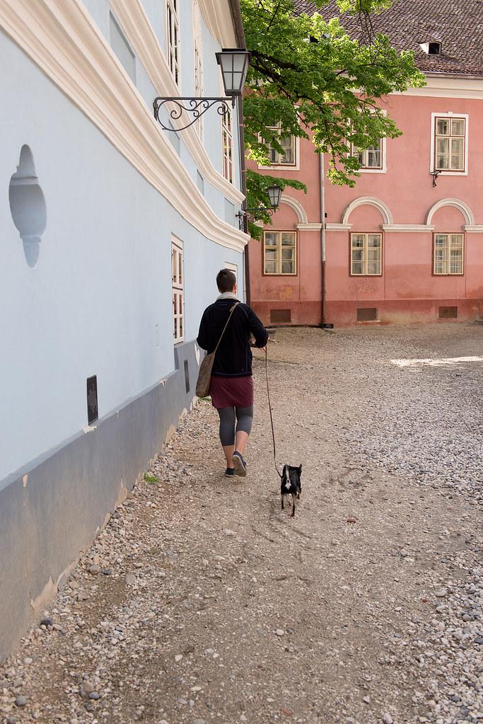 фото: Дама с собачкой