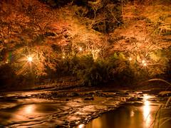 [HDR] Momiji with light up (gemapozo) Tags: autumn japan night river pentax jp chiba 日本 lightup 紅葉 hdr 千葉県 photomatix ライトアップ 養老渓谷 養老川 夷隅郡 yourougawa 645z smcpentaxfa64535mmf35alif